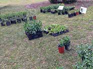 Brookgreen annual plant sale