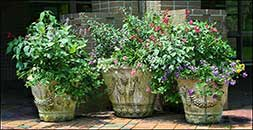 Flower pots Brookgreen