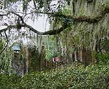 Moss-covered oaks surround the old kitchen and bell