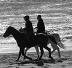 Myrtle Beach - Horses on the Beach