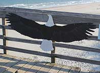 Myrtle Beach State Park - Eagle sign