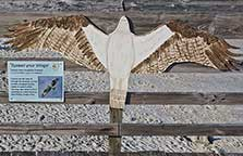 Myrtle Beach State Park - Ospry sign