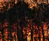 Firey sunset in our back yard