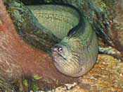 Another Eel at the Aquarium