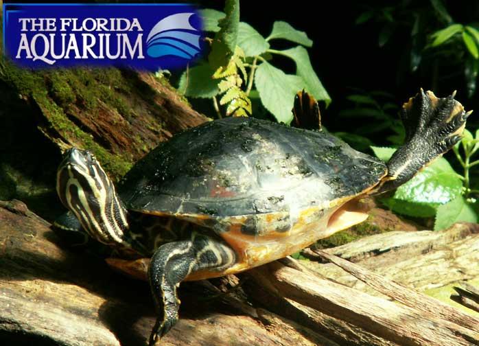 Tampa Fl Busch Gardens Aquarium Of Fl Pictues