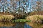 Back Creek Brookgreen - Pano