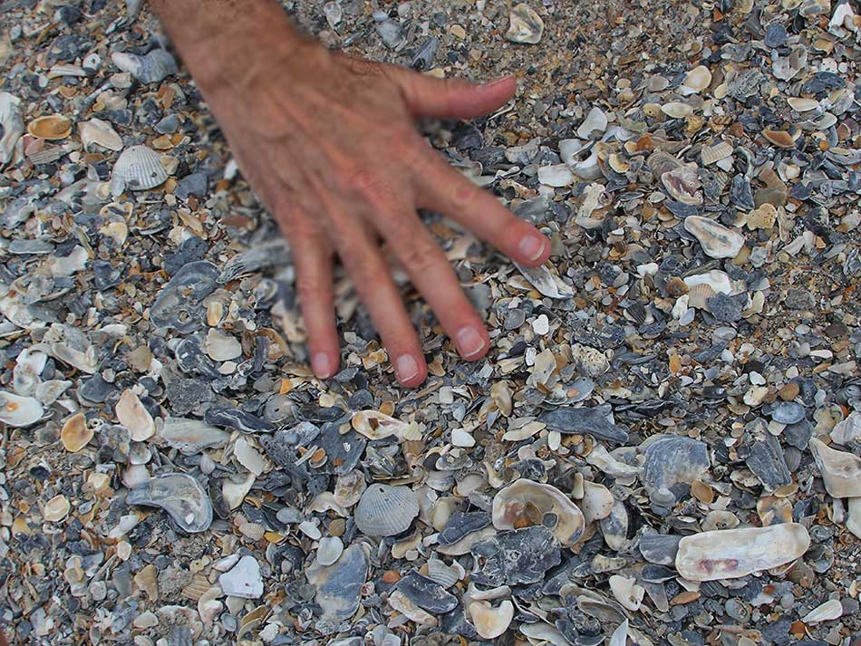 Wally May 2014 Sifting Sand Forshark Teeth