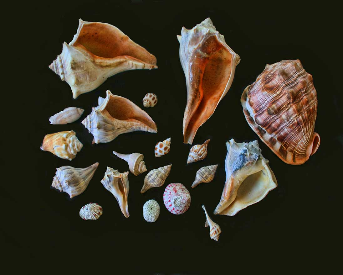 some of our shells